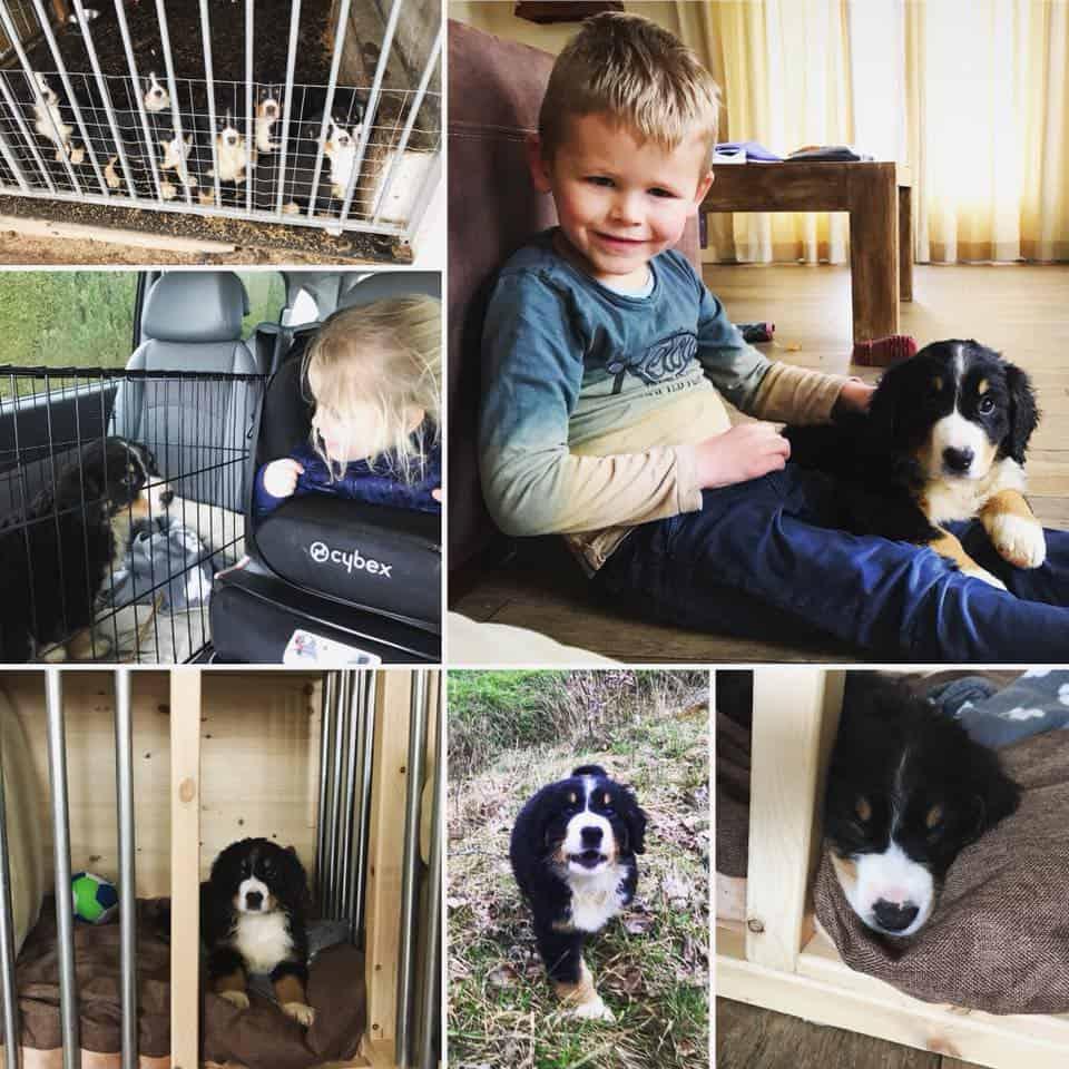Nieuwe aanwinst, Benji onze Entlebucher Sennenhond!