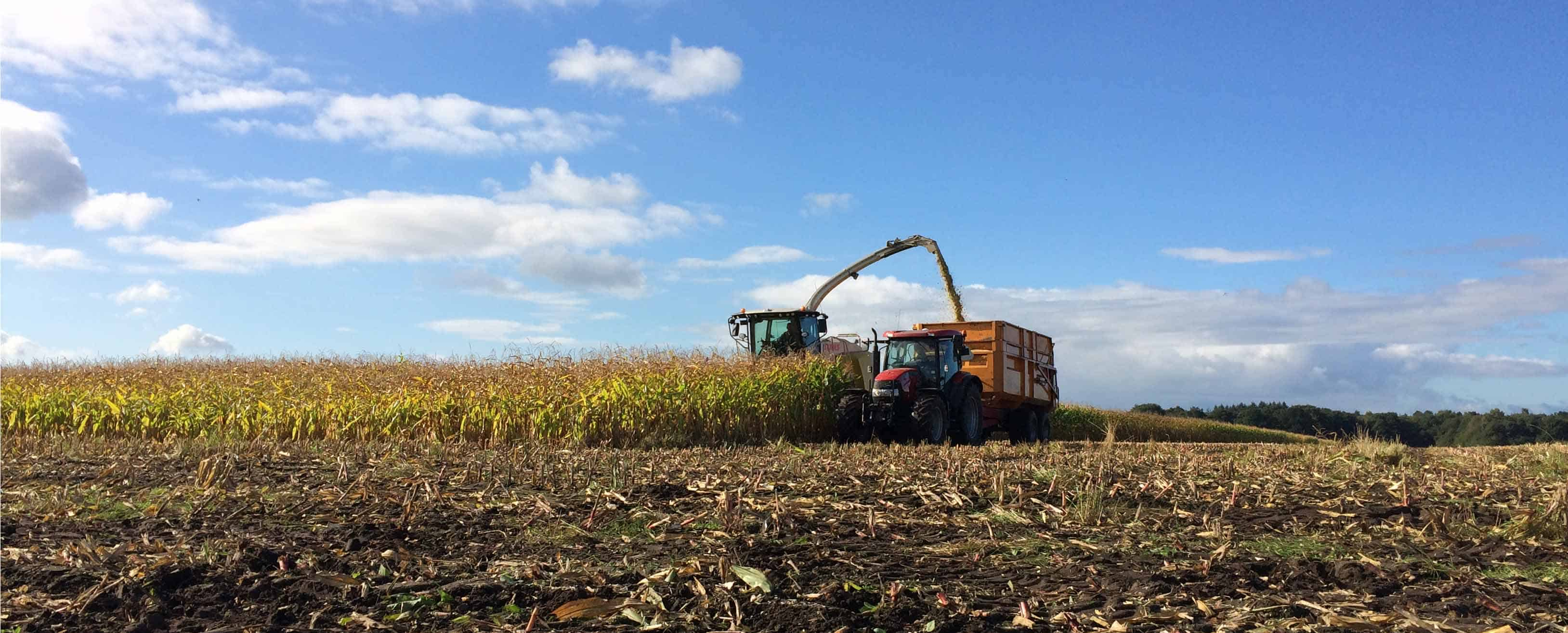 Maïs oogsten! Mooi weer, veel hulp & gezelligheid 💪